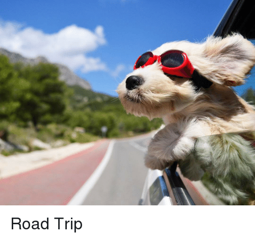 Share these 9 Simple Tips to Help You Save Money on a Road Trip!